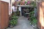 Garten in der Stadt - City Garden